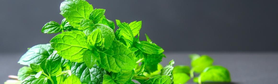 menthe poivrée plantes et ingredients